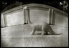 Pinhole: dinosaur | Flickr - Photo Sharing!