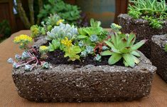 Hypertufa is possibly the cheapest way to get a lot of planters for your succulents. You can make your own hypertufa containers, which is a fun and. Succulents In Containers, Cacti And Succulents, Planting Succulents, Musgo Sphagnum, Organic Gardening, Gardening Tips, Cactus Plant Pots, Plant Information, Succulent Care