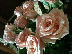 Rosas holandesas