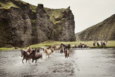 The Northen Plains of Aowyn, featuring the Hollow Cliffs and the horses reared by the Valthelin (Valley) Elves.