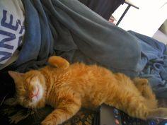 Spoiled little brat   http://ift.tt/2b5HqkG via /r/cats http://ift.tt/2b0rguq  cats funny pictures