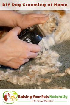 DIY Dog Grooming at Home. Basic Dog Grooming and How to Cut a Dog's Hair. Bonus Dog Grooming Video #raisingyourpetsnaturally #doggrooming #diygrooming #cavalierkingcharlesspaniel