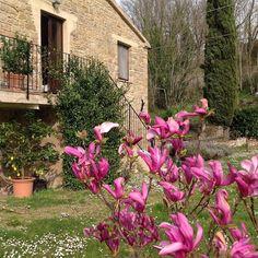 Spring has sprung! #bedandbreakfast #marchetourism #bbmulinobarchio #lemarche #marcheforyou #italy #travel