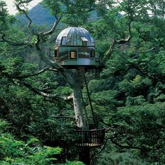 The uniqueness of the Tree House with art and architecture in the Japanese forest canopy. This tree house has a transparent roof design with three floors that have a height like a skyscraper. Cool Tree Houses, Bubble Tree, Bubble House, Beach Rocks, Unusual Homes, Unusual Art, Outdoor Living, Outdoor Decor, In The Tree