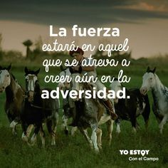 Twitter Horses, Twitter, Movie Posters, Art, Strength, Country, Buenos Aires Argentina, Animales, Art Background