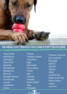 Dog Accessories Summer 39 Healthy Treats You Can Stuff in a Kong.Dog Accessories Summer 39 Healthy Treats You Can Stuff in a Kong Dog Treat Recipes, Dog Food Recipes, Dog Enrichment, Puppy Treats, Dog Care Tips, Pet Tips, Pet Care, Homemade Dog Treats, Healthy Treats For Dogs