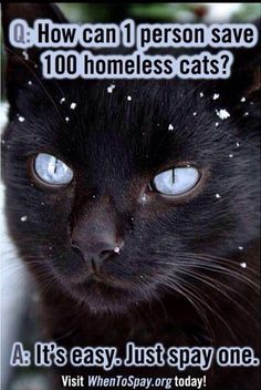 How to save 100 homeless cats?