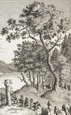 Saiva Moura - the Sacred Holy tree and a place of worship of the Nordic Sami people by Picart 1600's