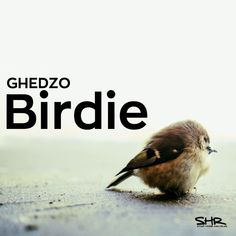Ghedzo - Birdie / snipp / by STOMP HOUSE RECORDS on SoundCloud