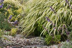 Plant Type: grass Foliage Type: deciduous Plant Height: 1 ft. 6 in. (0.46 meters) Plant Width/Spread: 5 ft. 0 in. (1.52 meters) Hardiness: USDA Zones 5 to 8 Sun/Light Exposure: light to dappled shade Water Requirements: regular watering during dry weather