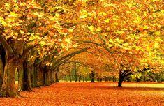Herfst Arrangement Drenthe - fietsroute, omgeving, cultuur, seizoen, uitje