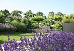 tuinontwerp-tuinaanleg-hovenier-eindhoven-helmond-nuenen-moderne-tuin-gazon-dakbomen-lavendel