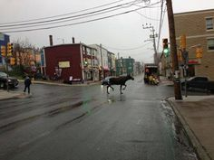 Great shot of the Moose on Duckworth Street, St. Looks like its on its way to Tims! Again, watch the moose. Newfoundland Canada, Newfoundland And Labrador, What Is Geography, Camping Places, Beautiful Places In The World, Great Shots, Canada Travel, Beautiful Islands, The Rock