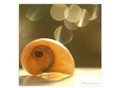 Seashell Photograph Seashell Print Beach by machelspencePHOTO, $6.99