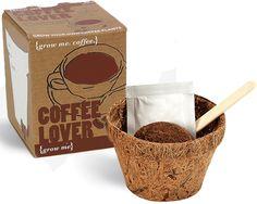 Mini Plant Growers So Many I Want Bean Seeds Coffee