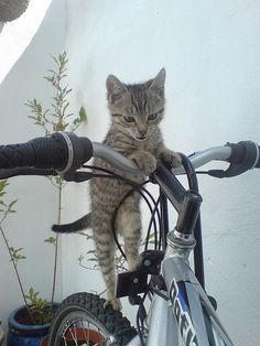 come on...let's ride....