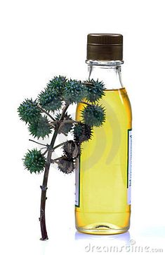 Castor oil is a vegetable oil derived from the castor bean seed in its purest form. Cultivators of castor beans remove the hull of the seed, before pressing it to obtain the oil. Castor Oil Uses, Organic Castor Oil, All Natural Skin Care, Organic Skin Care, Castor Bean Plant, Oil Bottle, Home Made Soap, Lip Gloss, Moisturizer