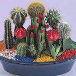 Cuando se quieren trasplantar los cactus se deben tener unos cuidados especiales por eso te decimos cuándo y cómo debes hacerlo en este Artículo Resumen