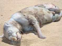 Real Pictures of the Unexplained | The unexplained Montauk Monster