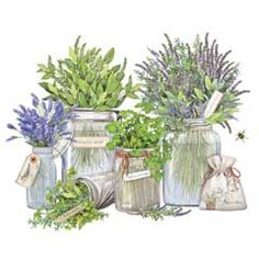 Herbs in Jars-Mary Lake-Thompson