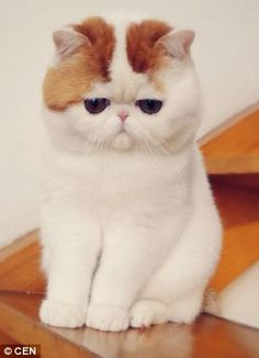 I will have a cat like this!!