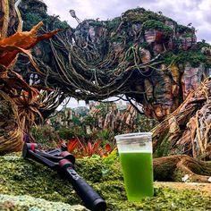 "A morning of shooting ""Disney Overload"" at Disney's Animal Kingdom."