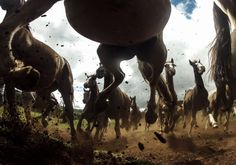 The Power of the Criollos Photograph by Chris Schmid -- National Geographic Your Shot