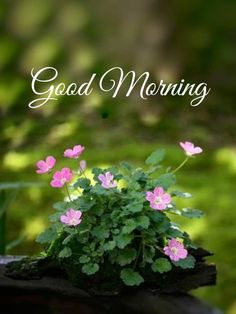 Beautiful Morning Pictures, Good Morning Images Flowers, Good Morning Image Quotes, Good Morning Cards, Good Morning Texts, Good Morning Picture, Good Morning Good Night, Good Morning Wishes, Morning Quotes