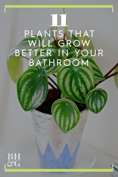 There's a trick to keeping houseplants thriving in dryer climates: It's the bathroom. The typical low light, high humidity, and warmth of the bathroom is exactly what most tropical plants are missing in their lives. Here are 11 plants for the bathroom. House Plants Decor, Plant Decor, Garden Plants, Vegetable Garden, Bamboo Plants, Desert Plants, Flowering Plants, Indoor Plants Low Light, Best Indoor Plants