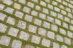 How to Install Square Concrete Pavers With a Ground Cover - good idea for the parking pad Landscape Pavers, Garden Pavers, Paver Walkway, Walkways, Stone Walkway, Driveways, Garden Path, Shade Garden, How To Lay Pavers