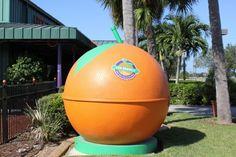 MustDo.com | Visit Sun Harvest Citrus for fresh Florida oranges, grapefruit, gifts and treats. Fort Myers, FL
