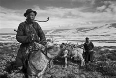 Illustration of the vanishing DUKHA people, Mongolia's last nomadic reindeer herders, by photographer and scholar of Tibetan and Mongol languages HAMID SARDAR-AFKHAMI. → #mongolia | #dukha | #tsaatan | #reindeer_people | #nomads | #reindeer