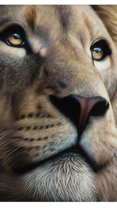 Amazing Lion drawing or painting. Lion of Judah Prophetic art. This is so beautiful! Look at those eyes!
