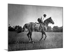 Race Horse Man O' War Photographic Print at Art.com