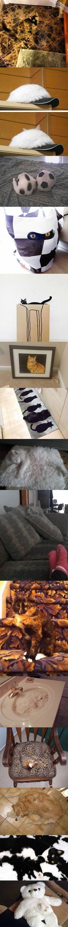 Has anyone seen my cat?