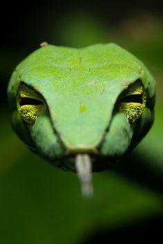 Green Snake https://www.eukhost.com/amazing-website/