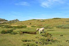 sur le plateau avec les pozzines pour les vaches, cochons, chevaux, ....