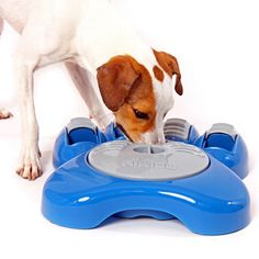 Interactive pet dish.  Slows your dog down by making him work for his dinner.