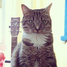 #cute #cat - SHE'S A GUITAR STAR