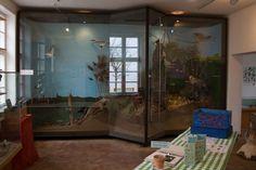 Zusammenarbeit mit dem NABU Schwerin für die Kraniche | Ausstellungsraum in der Naturschutzstation Schwerin (c) Frank Koebsch