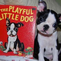 The playful little dog!