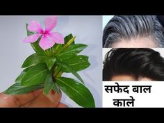 Grey Hair Remedies, Hair Remedies For Growth, Hair Loss Remedies, Beauty Tips For Glowing Skin, Health And Beauty Tips, Beauty Skin, Extreme Hair Growth, Ayurvedic Remedies, Hair Color And Cut
