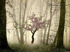 Cherry Tree, The Enchanted Wood photo via brunan