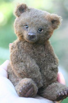Gorgeous Teddy !!