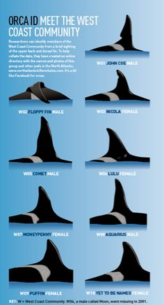 """scottish-orca: """" An old (slightly outdated)* Graphic of the ID Chart for the West Coast Community. Not Sure why Floppy's sense of direction is off in this graphic! *W10 - Named Occasus *Moon Missing 2008 """""""