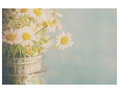 daisy photograph daisy flower photograph by #sweetdreamsandhoney #sunny16