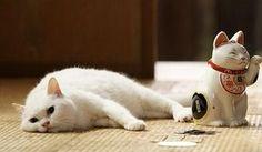 猫侍 ネコ・玉之丞 の「あなごちゃん」 可愛すぎる画像まとめ【あなご・白猫・北村一輝・アフラック】 - NAVER まとめ