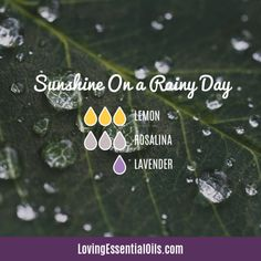 Lemon Diffuser Blend - Free Printable by Loving Essential Oils Sunshine on a Rainy Day with lemon rosalina and lavender essential oil Get the FREE printable cheat sheet with 10 Lemon Oil Recipes Essential Oils For Sleep, Lemon Essential Oils, Essential Oil Uses, Aromatherapy Benefits, Diffuser Recipes, Essential Oil Diffuser Blends, Lemon Oil, Allergies, Lotion