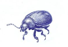 #ballpen #beetle #drawing