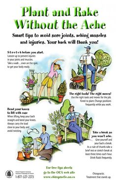 Stretches for gardening from your chiropractor... plant & rake without the ache!